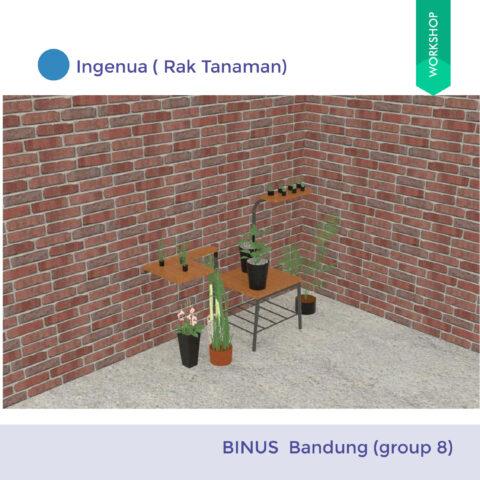 Ingenua ( Rak Tanaman)